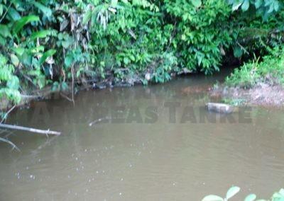 Small creek in tributary of the Marshalcreek, Suriname. Origin of Corydoras aeneus