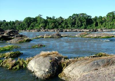 Ornamental fish imports from brazil – past, present & future