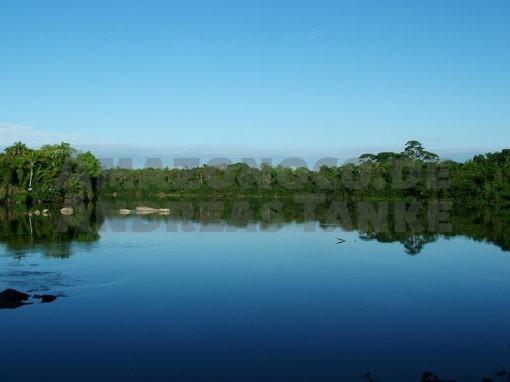 Plecos of Amazonia